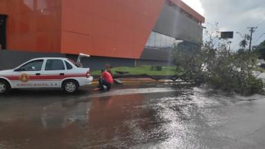 Defesa Civil de Barretos realiza ações e atendimentos após vendaval de terça-feira